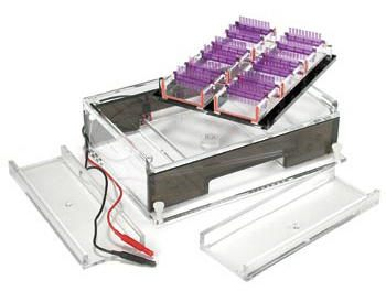 Owl* A2-OK Multiple Gel Horizontal Electrophoresis Systems from Thermo Fisher Scientific