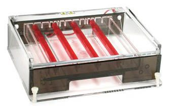 Owl* A6 Wide Gel Horizontal Electrophoresis Systems from Thermo Fisher Scientific